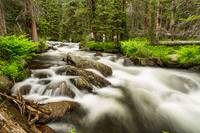 Roosevelt National Forest Stream