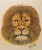 The Regal Lion