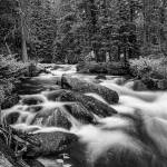 """Black White Roosevelt National Forest Stream Portr"" by lightningman"