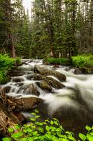 Roosevelt National Forest Stream Portrait