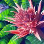 """""""Pink Bromeliad & Pup"""" by janlan44"""