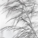 """""""Wind Grass"""" by CoraNiele"""