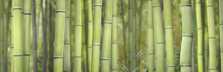 Green Bamboo Scape