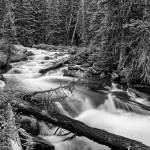 """Pine Tree Forest Creek Portrait in Black and White"" by lightningman"