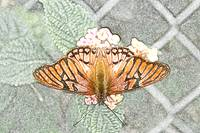 Orange and Black Butterfly on Pink Flower