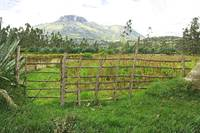 Fence and Corn Field