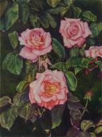 park's flower picture drawings 002 (three roses)