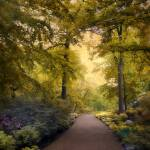 """Golden Walkway"" by JessicaJenney"