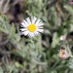 """""""Wyoming Flower_0715"""" by NikkiLeck"""