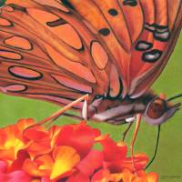 GulfFritillary #2 Art Prints & Posters by Denise Howard