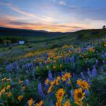 """Kittitas Spring Sunset"" by Dawsonimages"