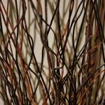 """Wood Reeds"" by LurenaHuffman"