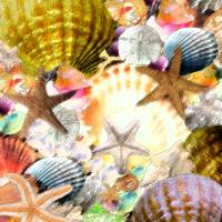 Seashore Shell Treasure Chest Art Prints & Posters by Ricardos Creations