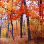 """Autumn Woodland Trail"" by JessicaJenney"