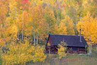 Colorado Autumn Cabin