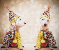 Circus Clown Dogs