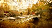 Bow Bridge Autumn Gold