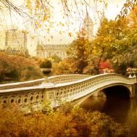 Bow Bridge Autumn Gold Art Prints & Posters by Jessica Jenney