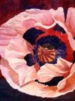 1994_003AA_Double Peach Poppy