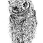 """Stippled Screech Owl"" by mgfrias"