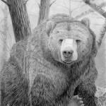 """Bear"" by BBeausoleil616"