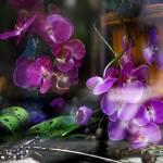 """""""Flower Shop Window"""" by patriciaschnepf"""