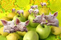 Pigs and Fruits