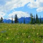 """""""Natural Splendor At Its Peak"""" by artsandi"""