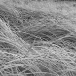 """Grassy Texture"" by SederquistPhotography"