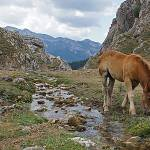 """Horse by Stream at Picos de Europa"" by Automotography"