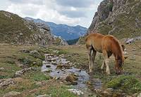 Horse by Stream at Picos de Europa