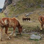 """""""Horses by Stream at Picos de Europa"""" by Automotography"""