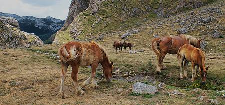 Horses by Stream at Picos de Europa