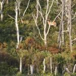 """Deer at Doane"