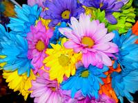 Daisy Flower mix