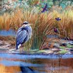 Marsh Madness- Great blue heron- Red winged black