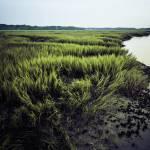 """Low Tide"" by blance"