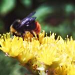 """""""Seconds bee-fore Takeoff"""" by PeteMoyes"""
