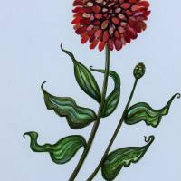 Zinnia Botanical Art Prints & Posters by Elizabeth Robinette Tyndall