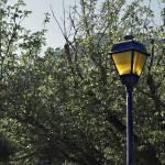 """""""Lamplight"""" by BDMC"""