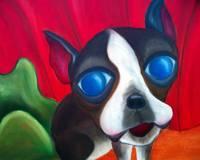 Dixie the Boston Terrier