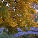 """Fall Tree and Bridge"" by AnnaMiller"