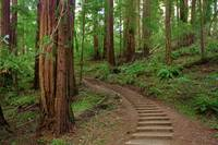 Path in Muir Woods, California