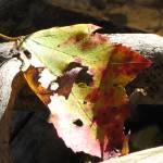 """""""Leaf Light"""" by myprojectlife"""