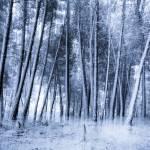 """Eternal Winter"" by mgarrido"