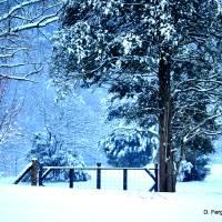 Snow Caped Winter Escape_DSC0189 Art Prints & Posters by Donna Forrister Ferguson
