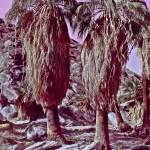 """Two Palms Trembling"" by kostliva"