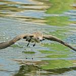 """""""Seagull Fishing"""" by DBenoit"""