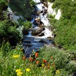 """Ruby Mtn waterfall with flowers P1100726"" by almarphotography"
