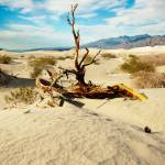 """Desert Tree  P1010146"" by almarphotography"